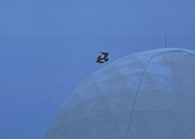 birds playing over a radome