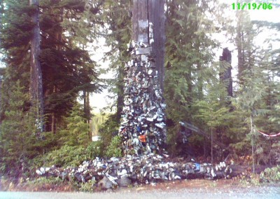 The Shoe Tree 1