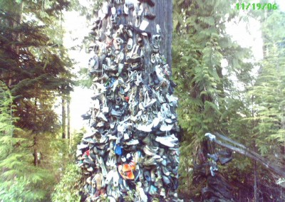 The Shoe Tree 3