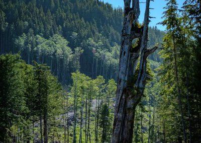 The Holberg Tree