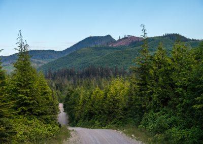 Backwoods in the Quatsino Forest