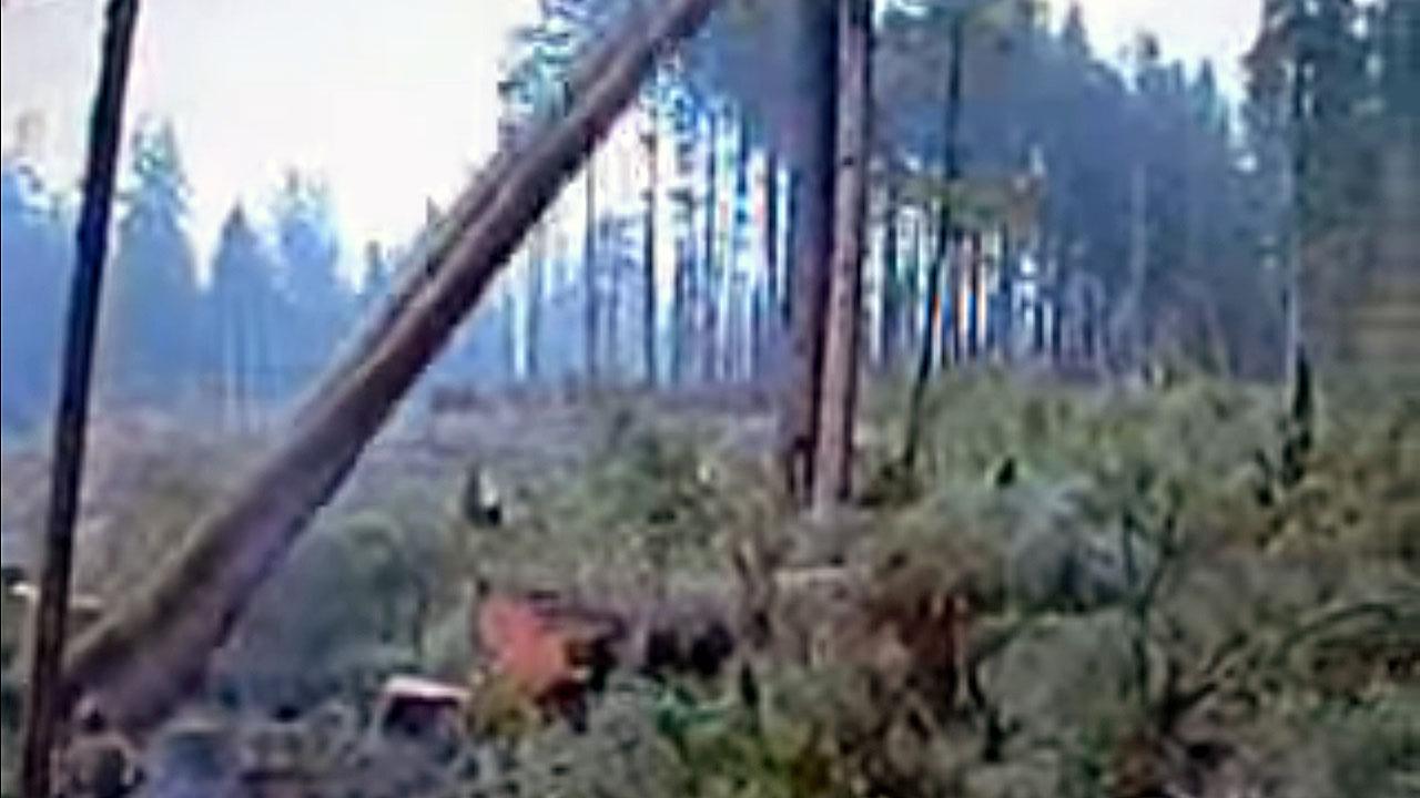 treefallingholberg2a